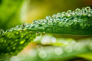 Blades of grass with water drops and