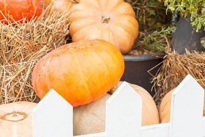 Autumn pumpkin close-up