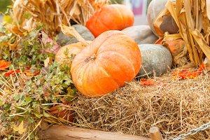 Autumn pumpkin close-up