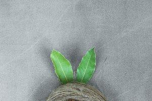 Nest and hidden bunny