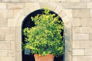 Green plant on stone wall