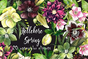 Hellebore set 20 watercolor clipart