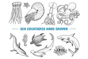 Seafood or sea creature nautilus pompilius, jellyfish and starfish. octopus and squid, calamari. engraved hand drawn in old sketch, vintage style. nautical or marine. animals in the ocean.