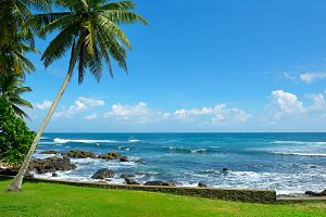Tropical seascape with coconut palm