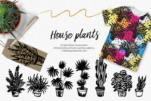 House plants - hand drawn set