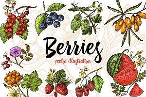 Set berries. Hand drawn.