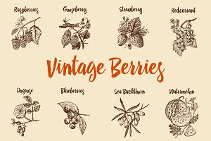 Set berries. Vintage style.