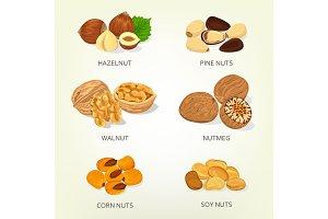 Hazelnut and walnut, corn and soy nuts shell