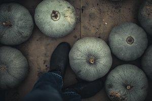 autumn squash at farm