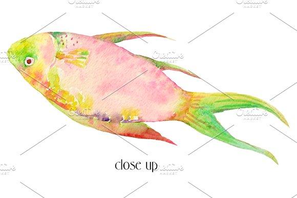 Watercolor Clipart Tropical Fish Illustrations Creative Market