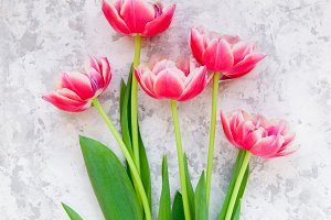 Pink tulips on light background