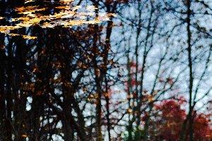 Autumn Leaves On Pond