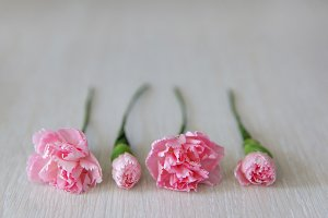 Four pink carnations on white table.