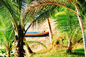 Canoe In The Palms, Panama