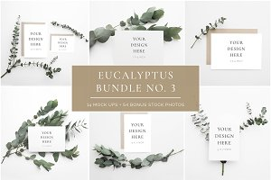 Scandinavian Eucalyptus Bundle No. 3