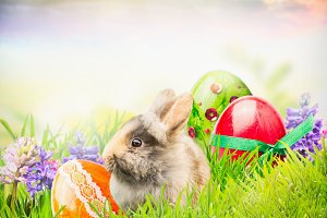 Easter rabbit on grass with eggs