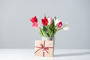 blooming tulip flowers in vase