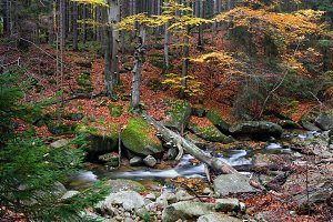 Autumn Mountain Forest With Creek
