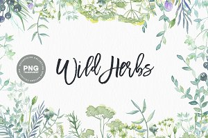 Watercolor Wild Herbs