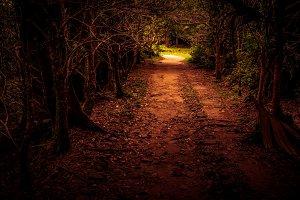 Mystery path