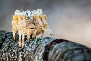 hairy spider on a branch