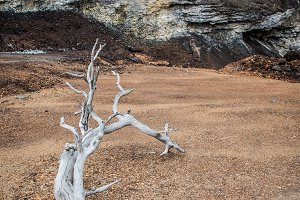 Dry tree in desert with rocky bottom