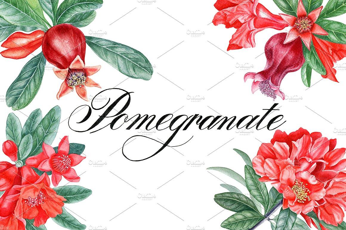 Pomegranate ~ Illustrations ~ Creative Market
