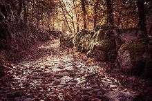 autumn landscape with stone path