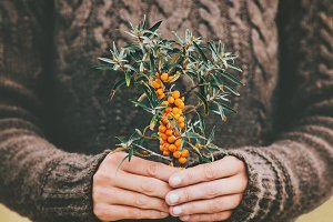 Woman hands holding sea buckthorn