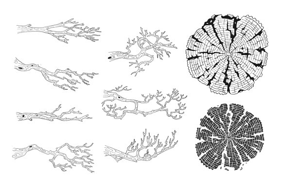 Branches & Tree-rings in Illustrations - product preview 1