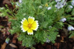Petite Flower