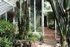 Cacti house