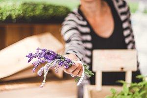 Lavender farmer at Farmers Market