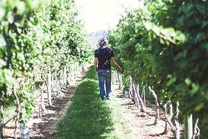 Winemaker tending to the vines