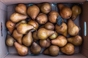 box of bosc pears