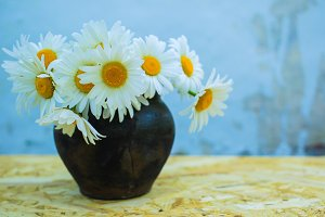 Bouquet of large white daisies