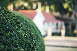 Beautiful gardens in Ipswich City.