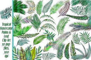 Watercolor Tropical Palms Clip Art