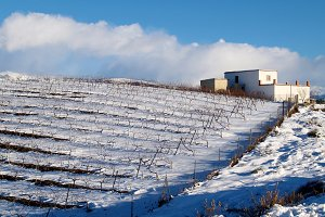 Snowy vineyard and blue sky