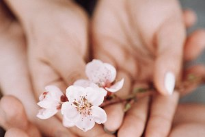 hands with a spring pink flowers