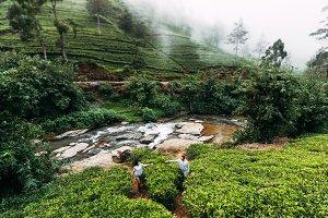 Loving couple on a tea plantation