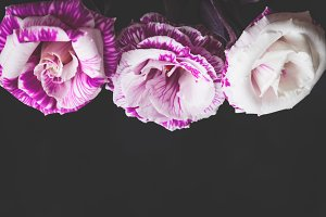 Purple flowers frame