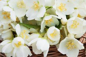 Basket with jasmine flowers