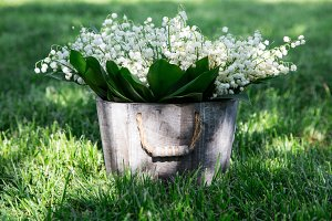 lilies of the valley in a basket