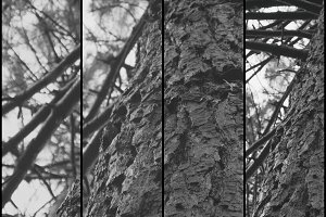Collage nature, trunk of tree