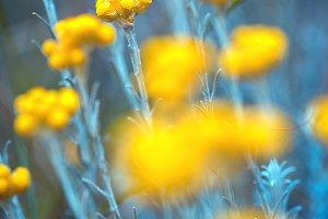 vintage yellow beautiful flowers in