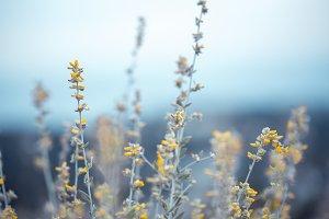 beautiful soft big meadow wild yello