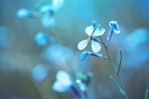 spring nature flower on blue backgro