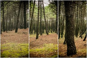 Collage nature, pine forest