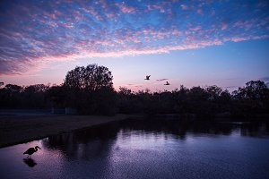 Florida sunset with a big bird
